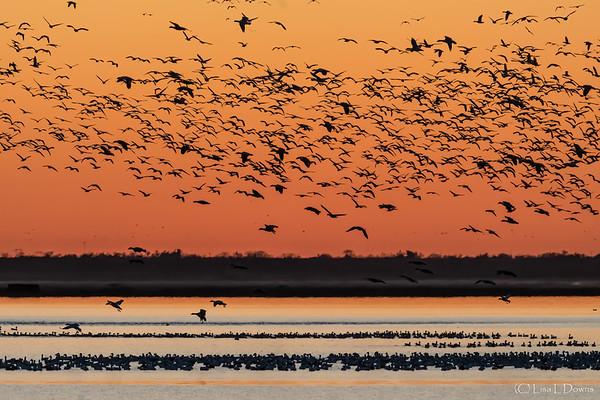 Cheyenne Bottoms Sunset  _D755022-Edit-3