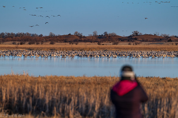 Lisa photographs Sandhill Cranes on a frozen marsh _D855747