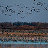 Sandhill Cranes at sunrise  _D754352-Edit