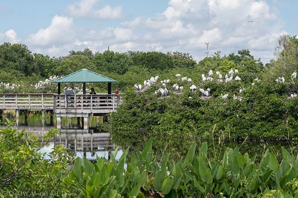 Wakodahatchee Wetlands, Palm Beach County, FL  D75_1826