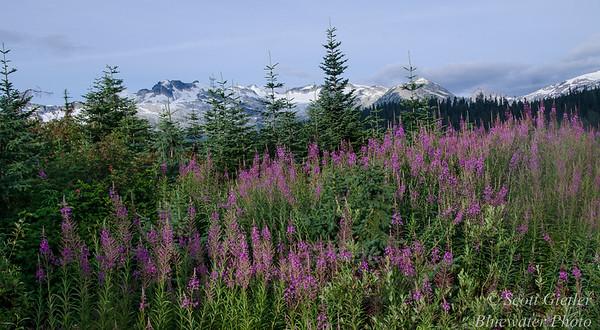 British Columbia Wildlife & Nature