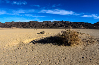 Lone bush in the Racetrack Playa, Death Valley, California
