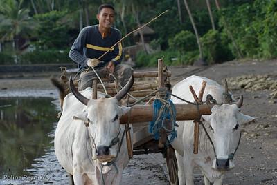Sulawesi - Village Life