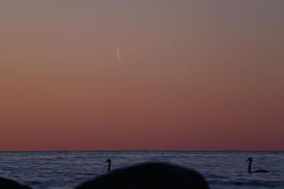 Månen på väg upp