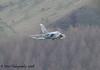 ZA447 (41(R) SQN marks) Tornado GR.4 - 10th December 2008.