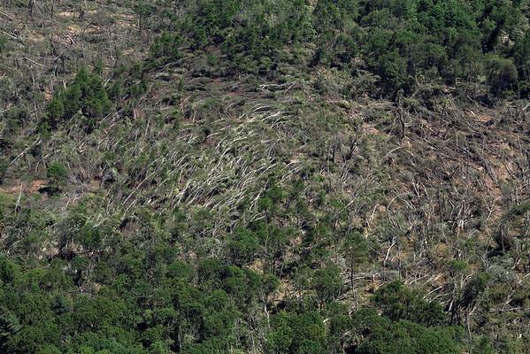Aerial photo taken 6/7/2011, Monson, MA tornado  - Looking east, tree fall pattern.