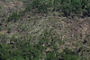 Aerial photo taken 6/7/2011, Monson, MA tornado  - Looking east, tree fall pattern.