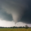 A cow looks on as a cone tornado touches down near Hickory, OK, on May 21, 2011.
