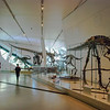 "The <a href=""http://www.rom.on.ca/exhibitions/nhistory/dinosaurs.php"" target=""_blank"">Dinosaur</a> gallery  <a href=""http://www.rom.on.ca/dinos/"" target=""_blank"">Dinosaur microsite</a>"