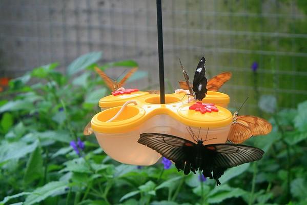 Nectar Happy Hour.JPG