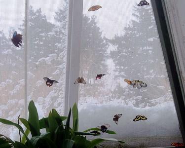 Buttterflies on the Screen.JPG