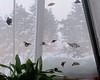Buttterflies on the Screen