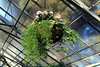 Hanging Plant with Glass Ceiling