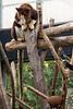 Tree Kangaroo 2