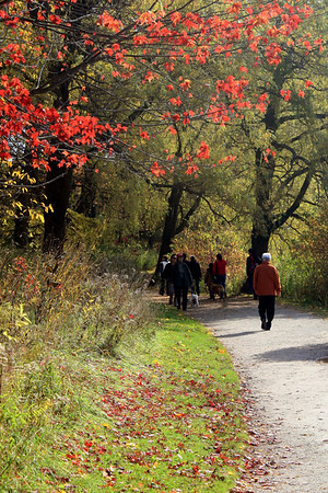 Autumn Strolls in High Park