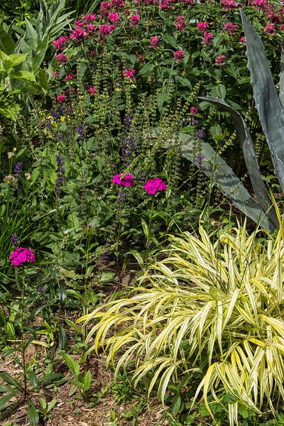 Section of Garden