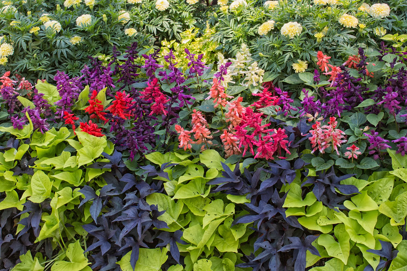 Annuals Arrangement