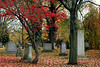 Graves with Red Leaves