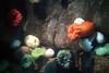 Colourful Coelenterates