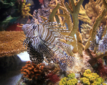 Ripley's Aquarium  - Toronto