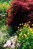 Toronto Botanical Gardens #4