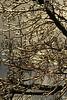 Bejewelled Twigs