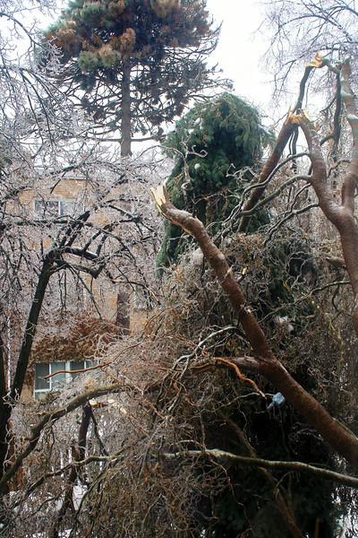 Broken Tree By Window