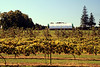 Ocala Vineyards #1