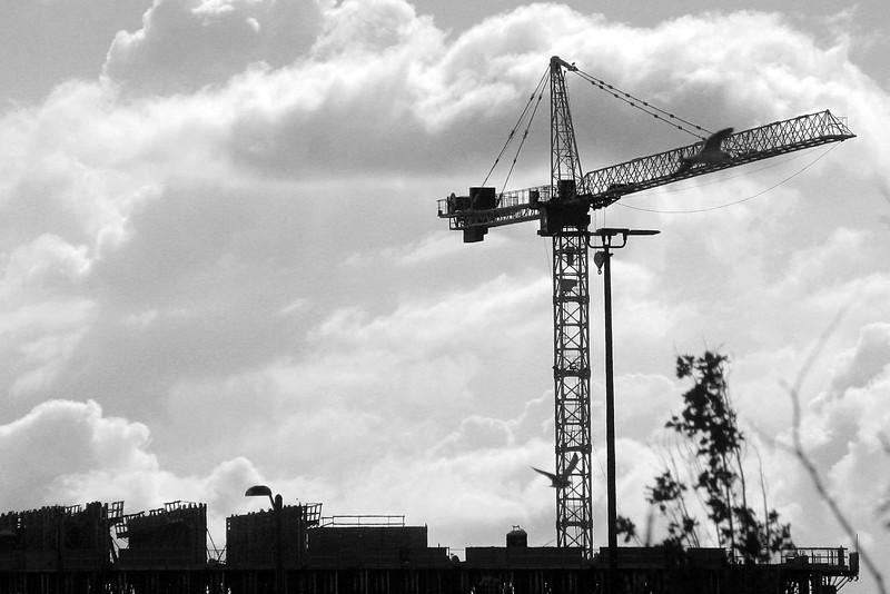 Crane in Silhouette