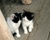 Kleinburg - Kittens #4