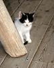 Kleinburg - Kittens #3
