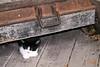 Kleinburg - Kittens #6