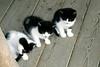 Kleinburg - Kittens #5