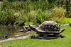 A Turtle in the Sun