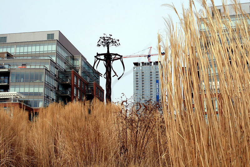 High Rise View with Winter Grasses