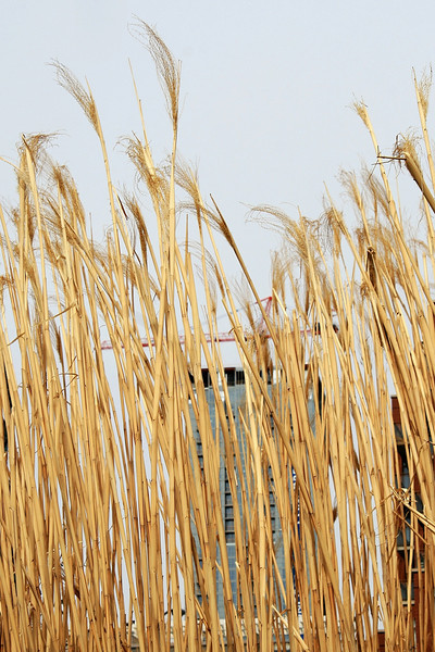 Grasses and Construction