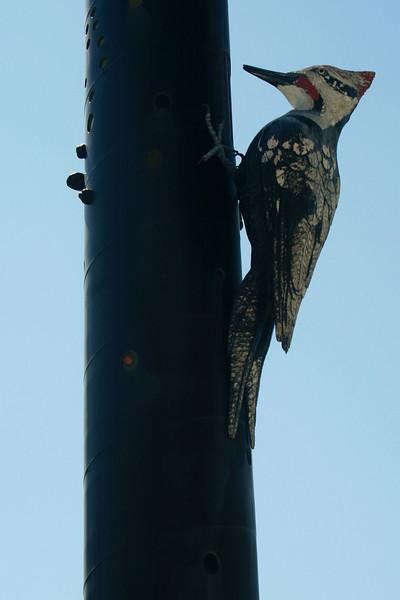 Upper Woodpecker