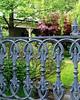 Drumsnab - Iron Fence