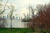 Skyline View with Sapling