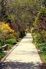 Springtime Path