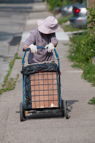 Bringing home the groceries