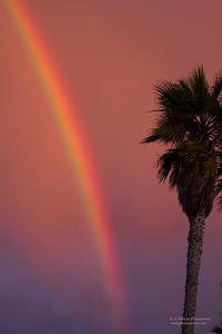 Rainbow Torrance