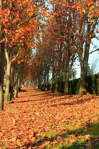 Torrance Leaves