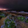 Del Mar Bioluminescence