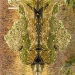 Totem -  6  -  Stingray
