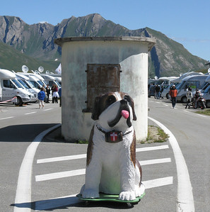The Saint Bernard of Col du Petit St. Bernard