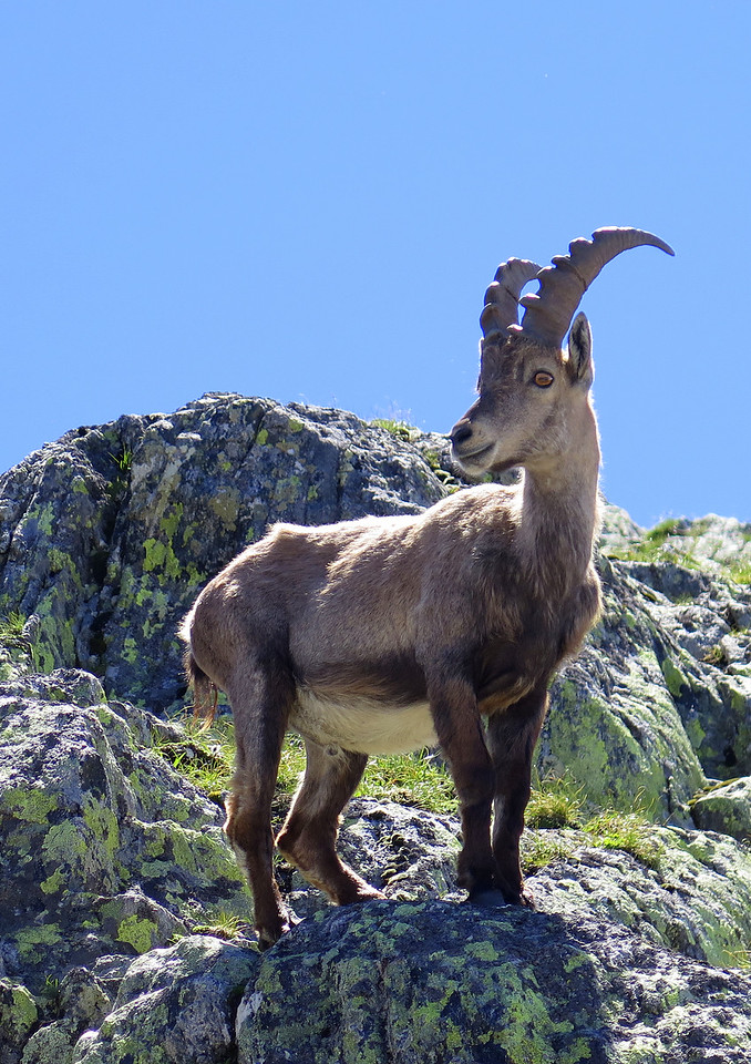 This Ibex kept a keen eye on us