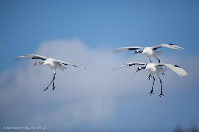 Flight Trio