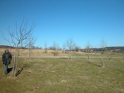 sehr viele Obstbäume beim Lehrpfad in Dieterkirchen, leider noch kahl im März