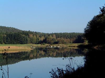 Turesbach
